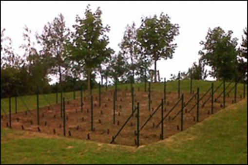 Large_small_vineyard