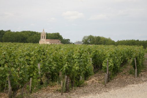 Large_france_vineyard