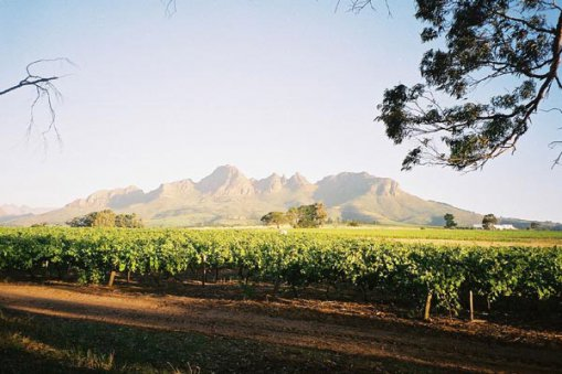 Large_south_africa