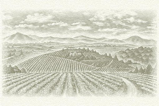 Large_vineyards_area